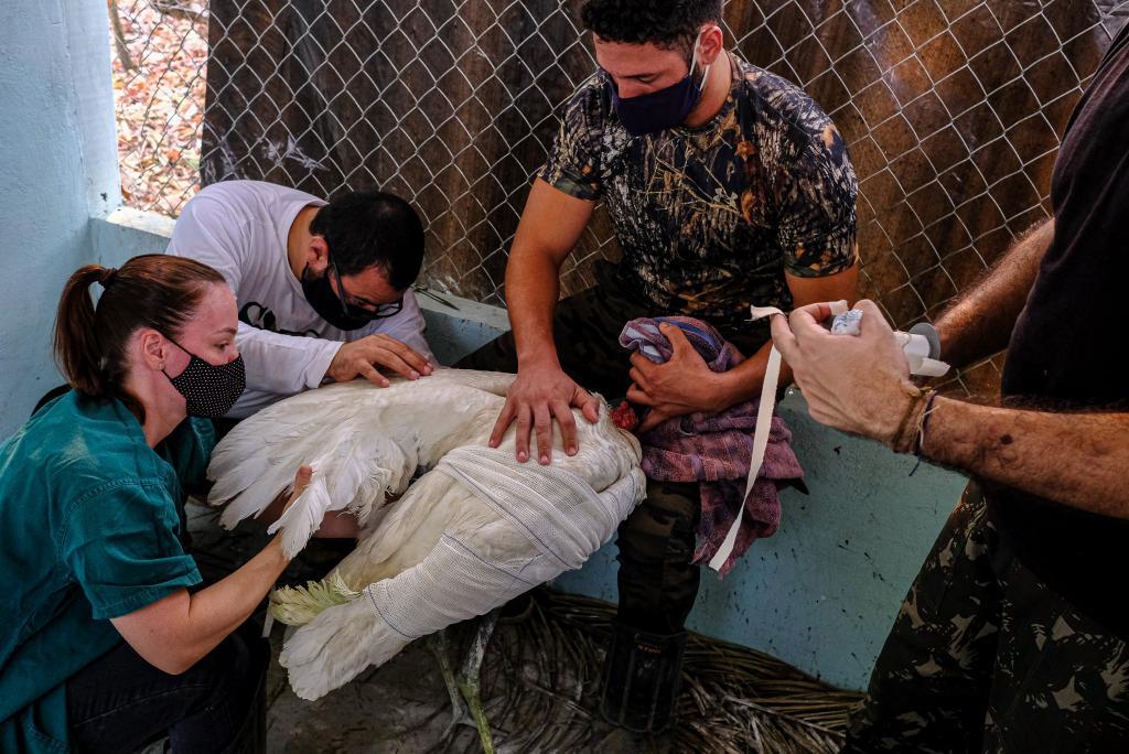 Parceria entre Governo e Programa REM garante mais R$ 300 mil para resgate de animais