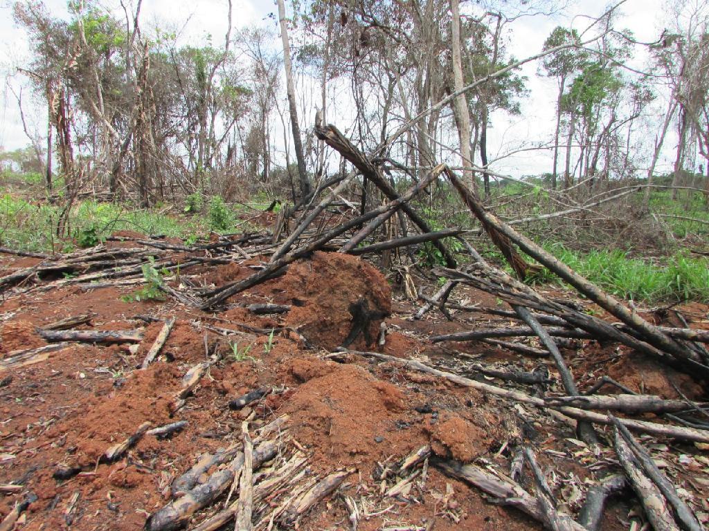 Operação Abafa fiscaliza 17 propriedades e aplica R$ 4,2 milhões em multas na Região Amazônica