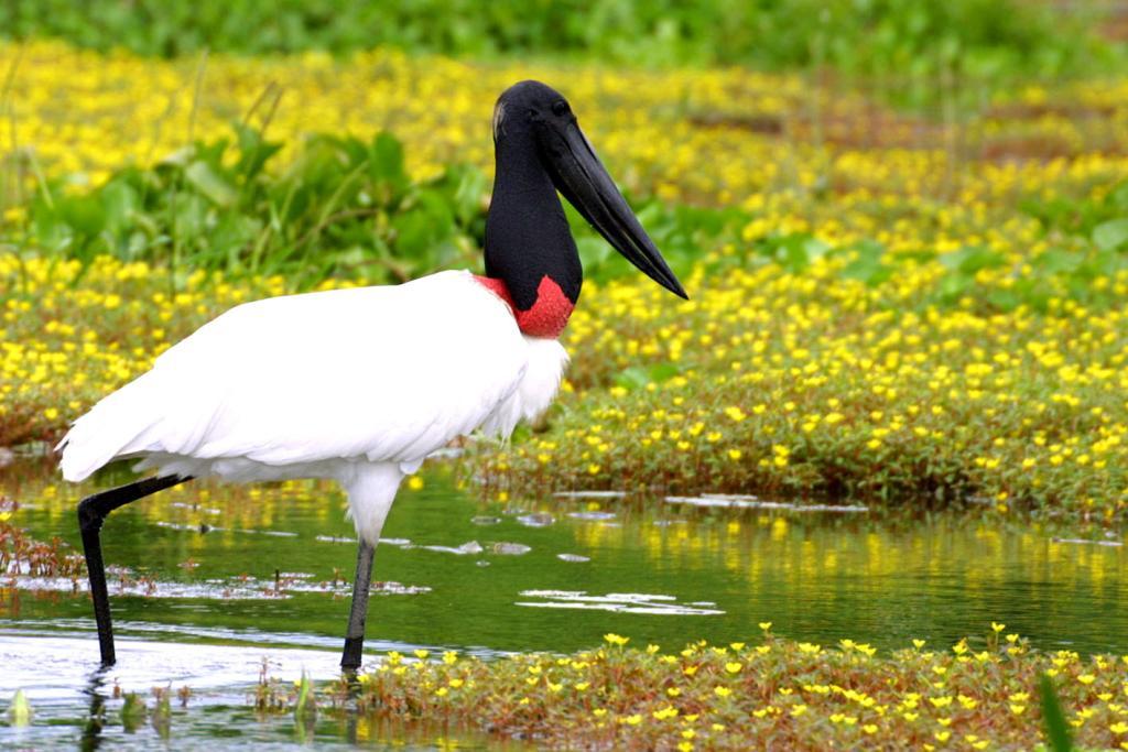Ibama conduz e regulamenta resgate de animais no Pantanal com apoio da Sema-MT