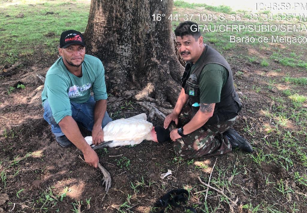 Sema-MT atende tuiuiú ferido por linha de pesca em Barão de Melgaço