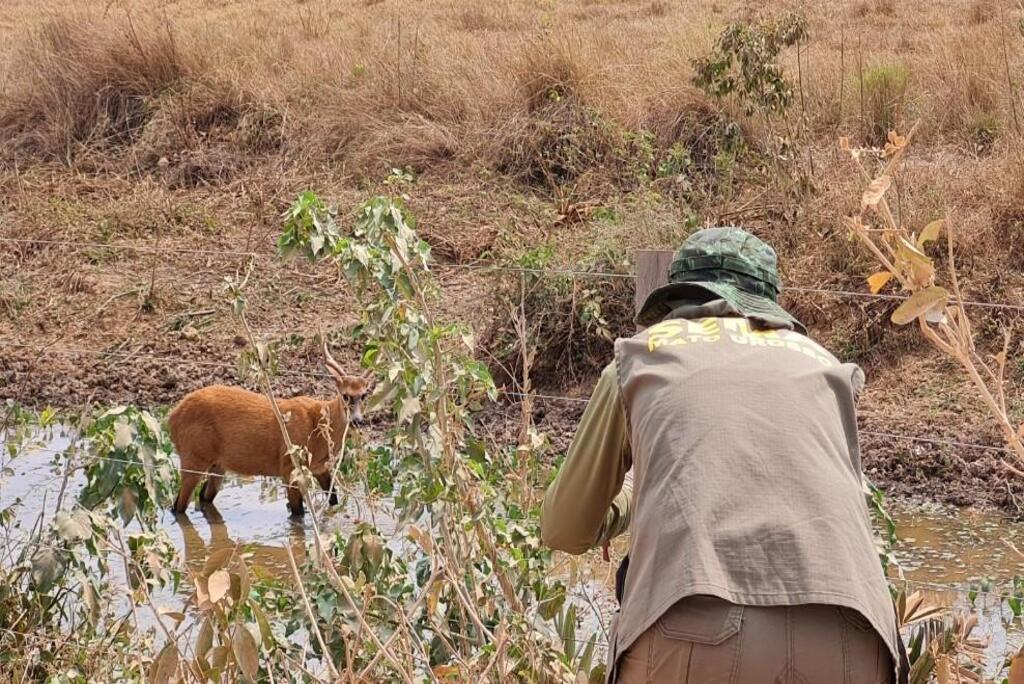 Sema-MT ouve especialistas e orienta a não alimentação de animais do Pantanal