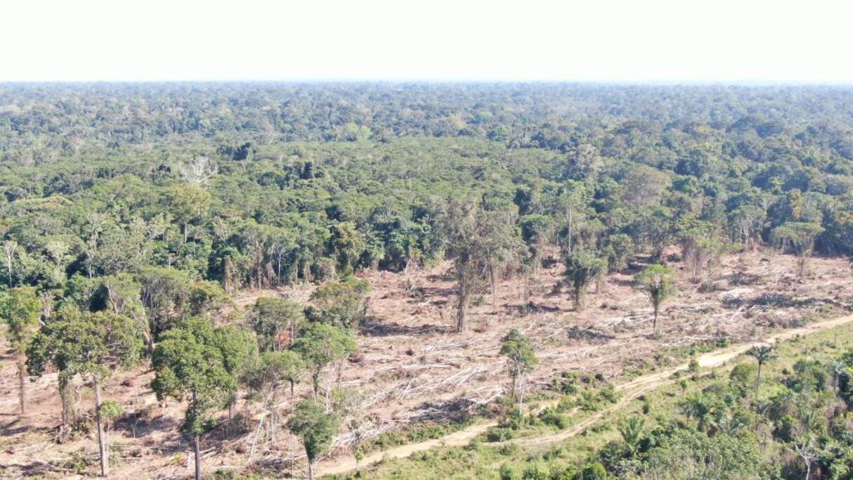 Sema realiza operação de combate ao desmatamento ilegal e aplica R$ 3,7 milhões em multas
