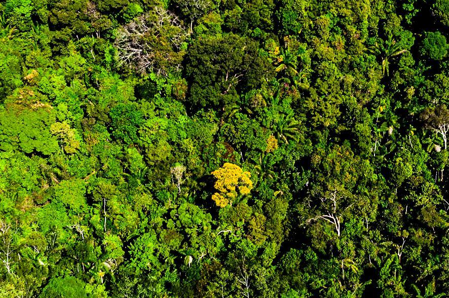 Mato Grosso mantém 30% de redução de alertas de desmatamento nos últimos 8 meses